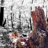 broken-tree-copy
