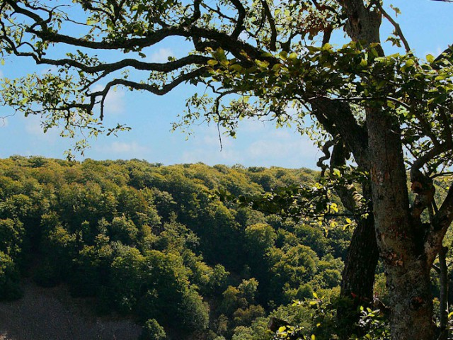 Tree at kopparhatten