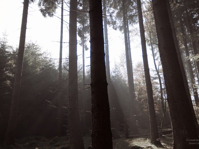 Forrest rays