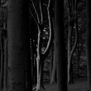 Light in tree